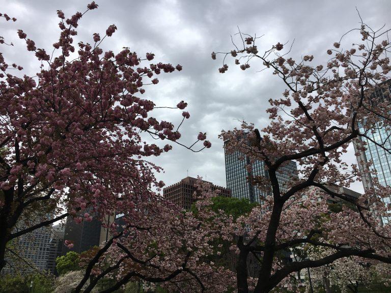 Tokyo in April