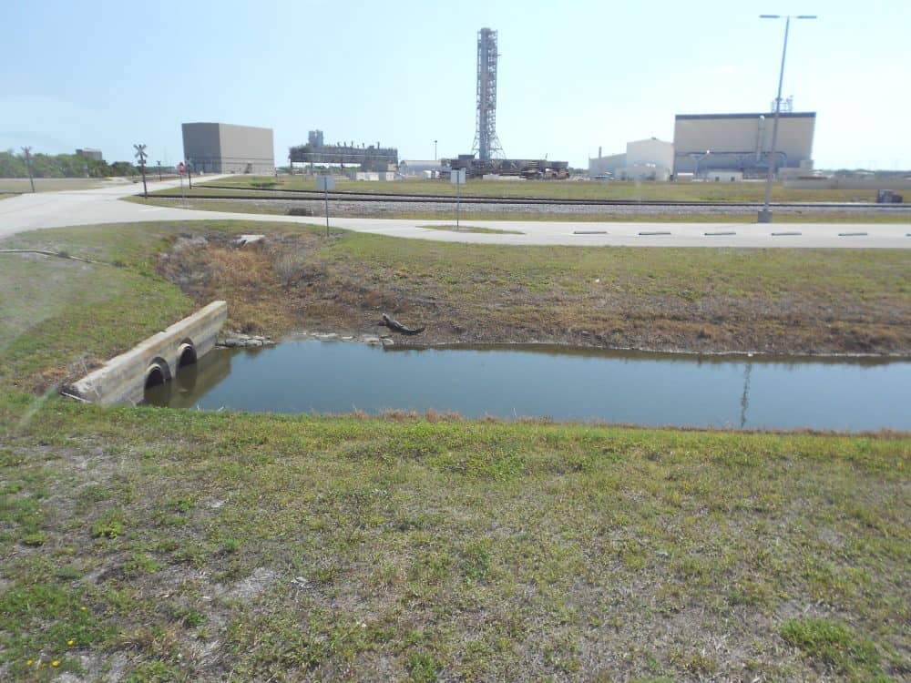 Kennedy Space Centre Alligator
