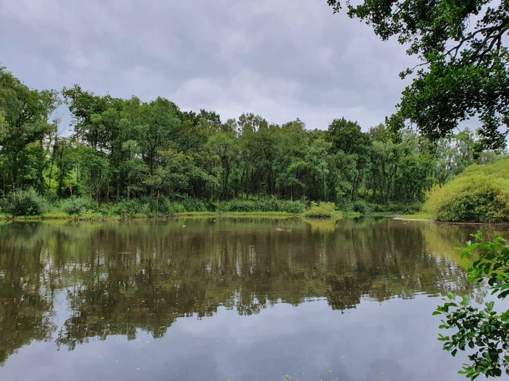 Ffynone woods pond