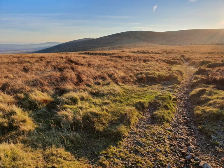 The Preseli Hills Golden Road boggy section