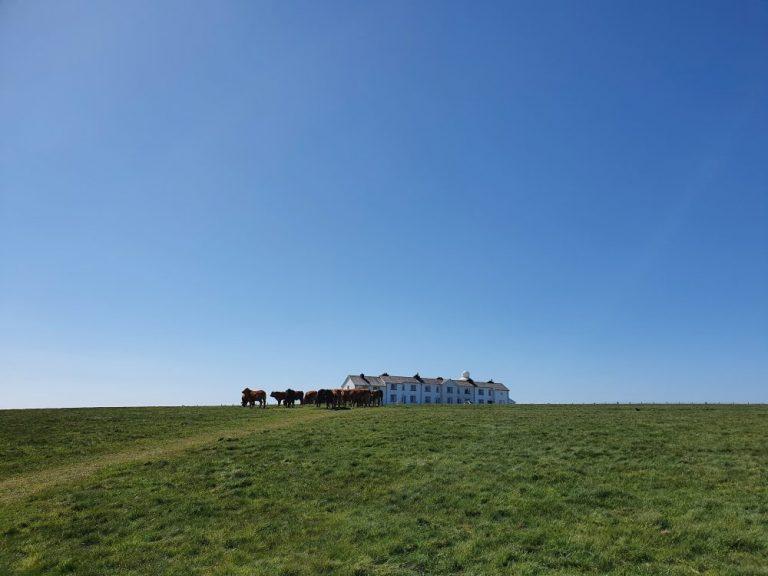 Field of cows on Dale Circular Walk
